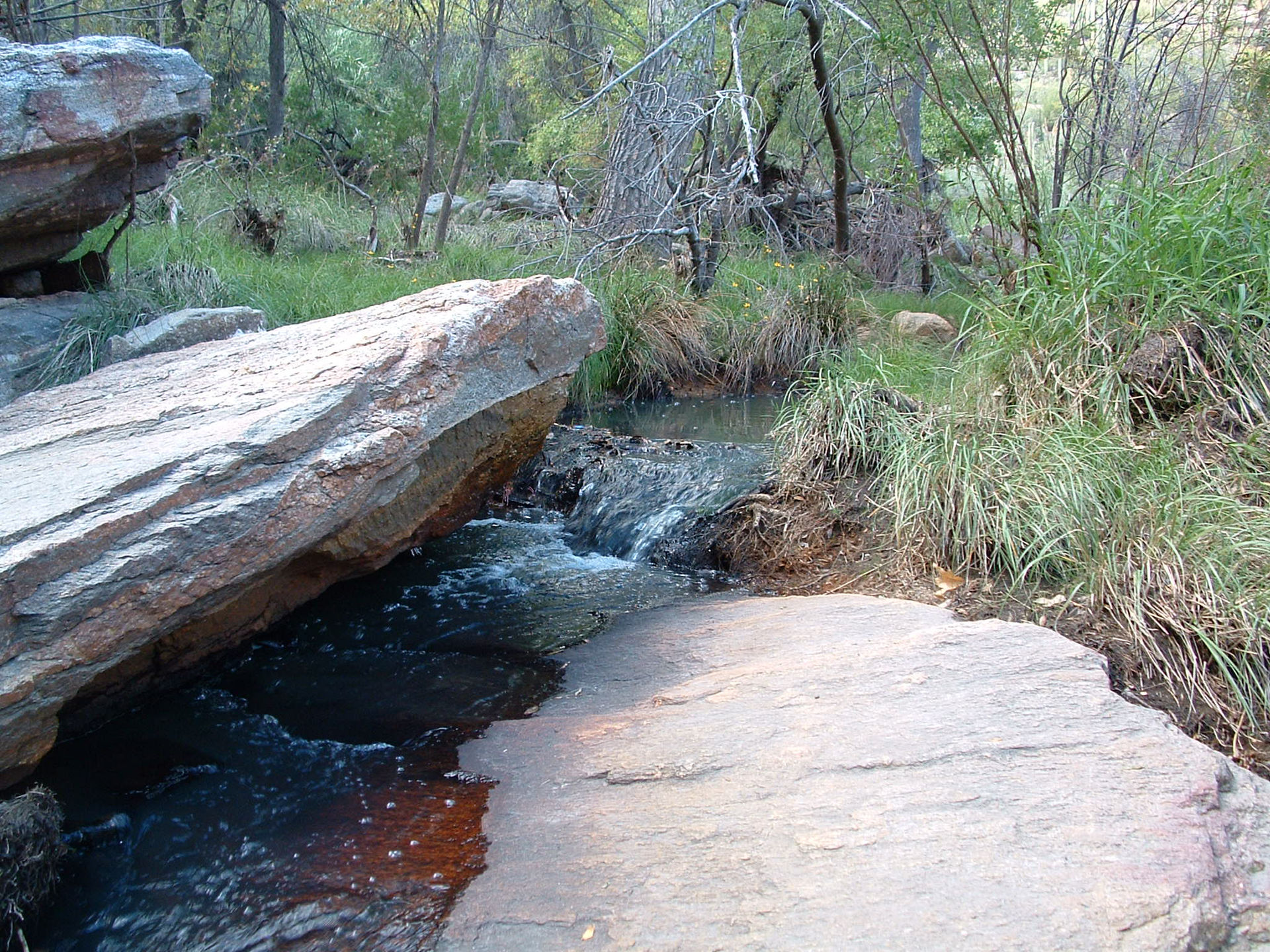 sabino-creek-hike-tucson.jpg