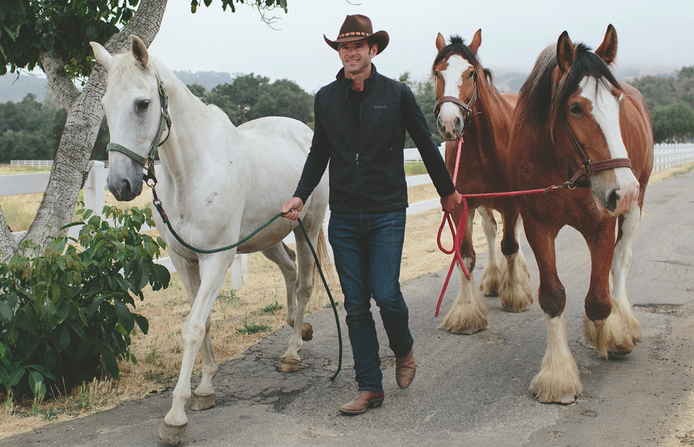 Clydsdales.jpg