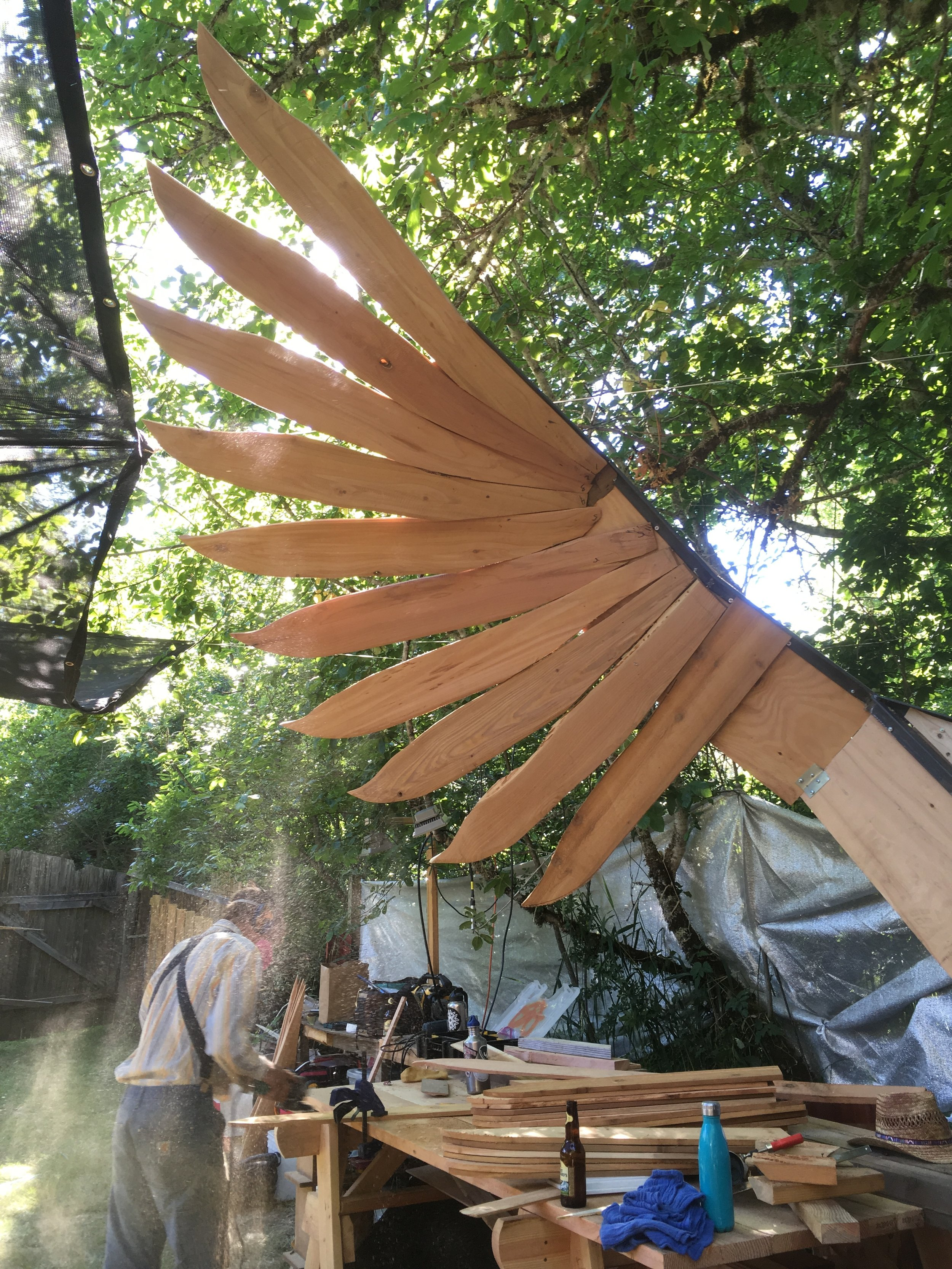 The beginnings of Fotia's wings