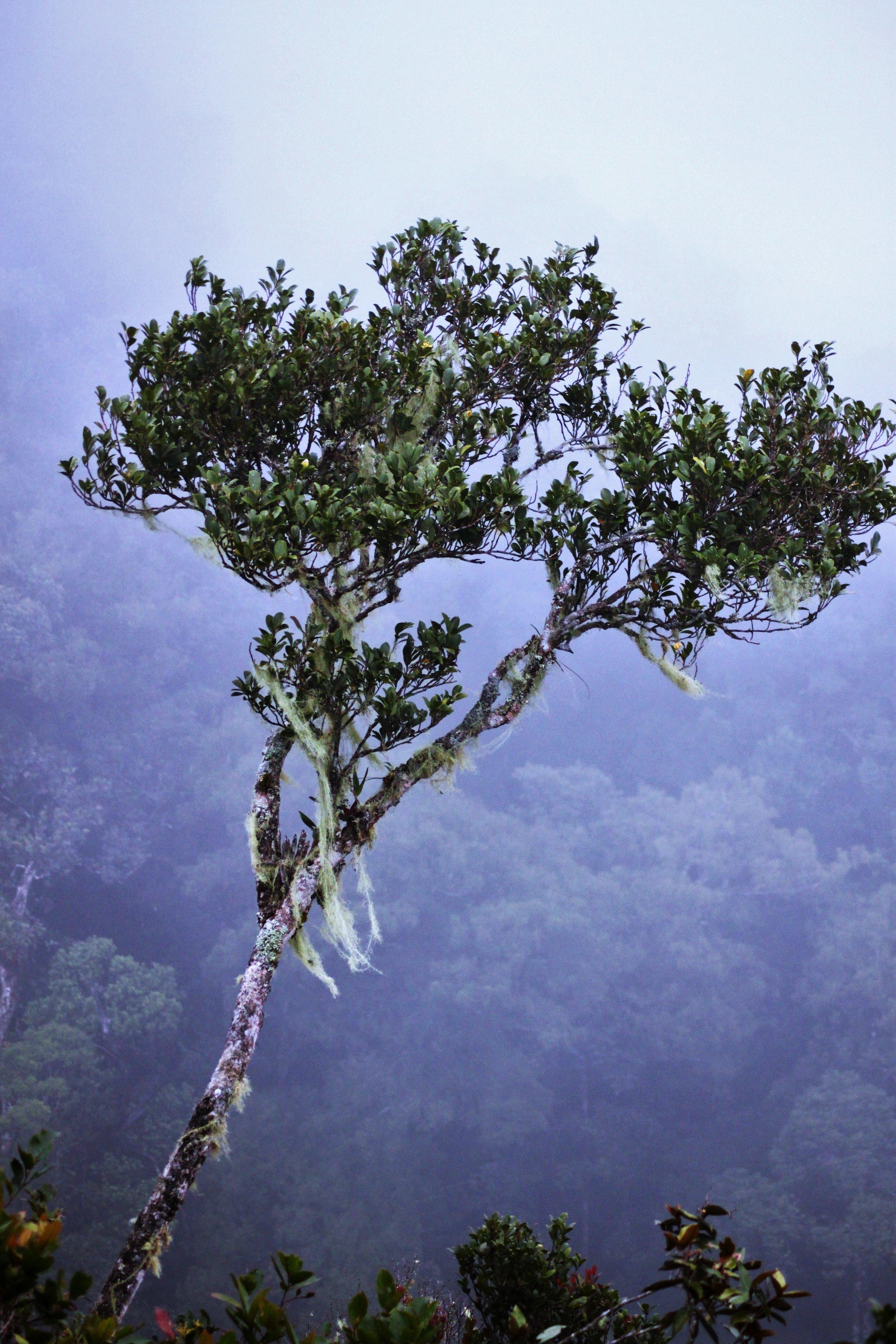 Mt. Kinabalu II