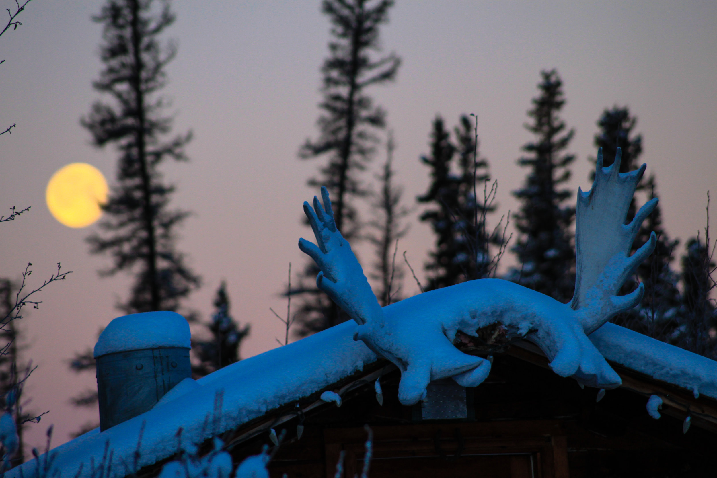 Full Moon Moose