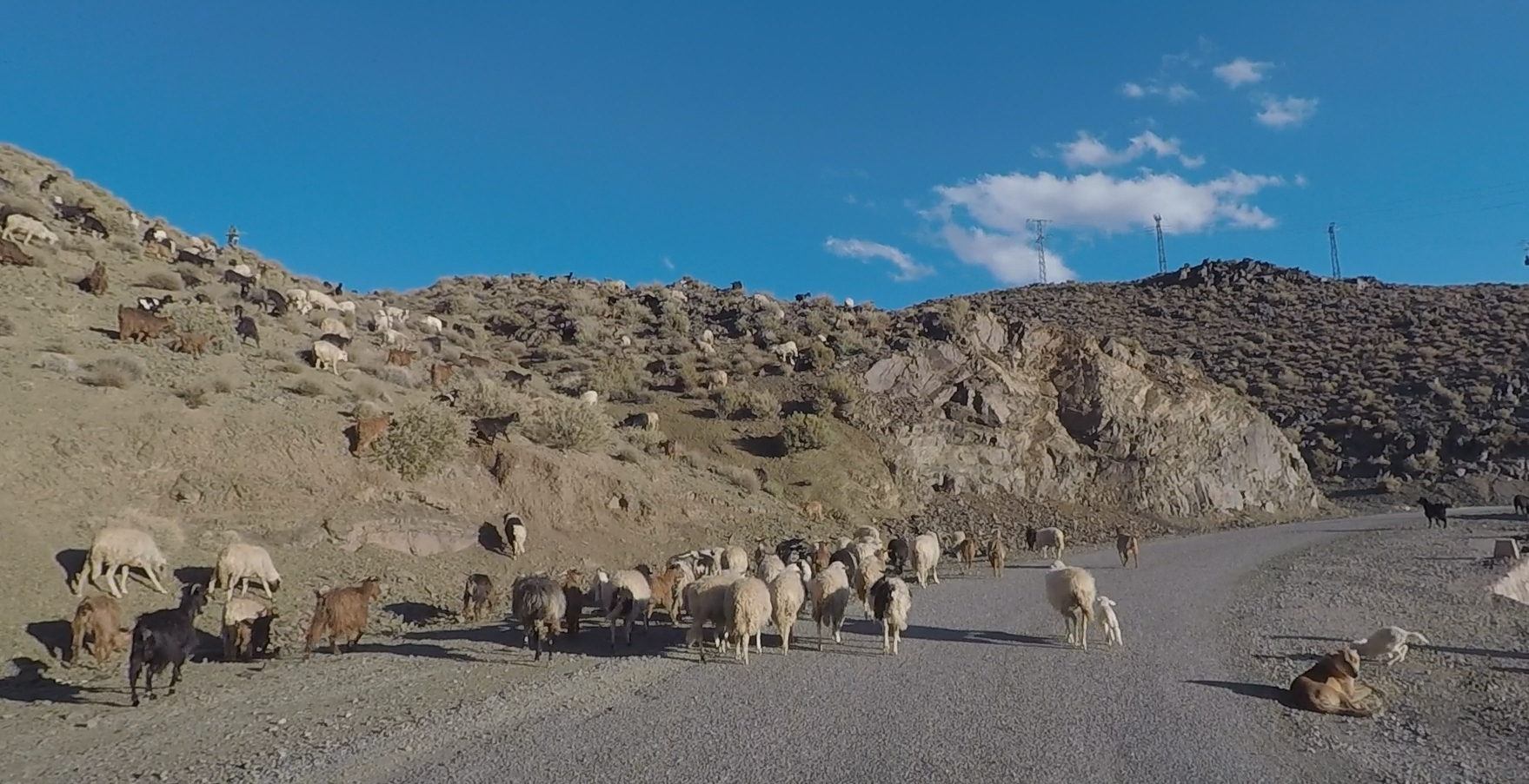Typical traffic jam in the rural areas of Morocco!