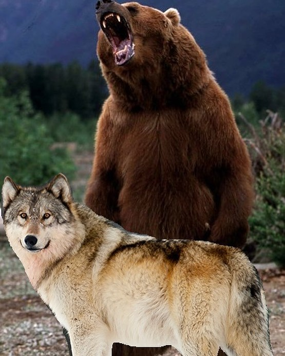 Truly one of God's most mysterious creatures. The bearwolf. Learn more about it on this week's episode!