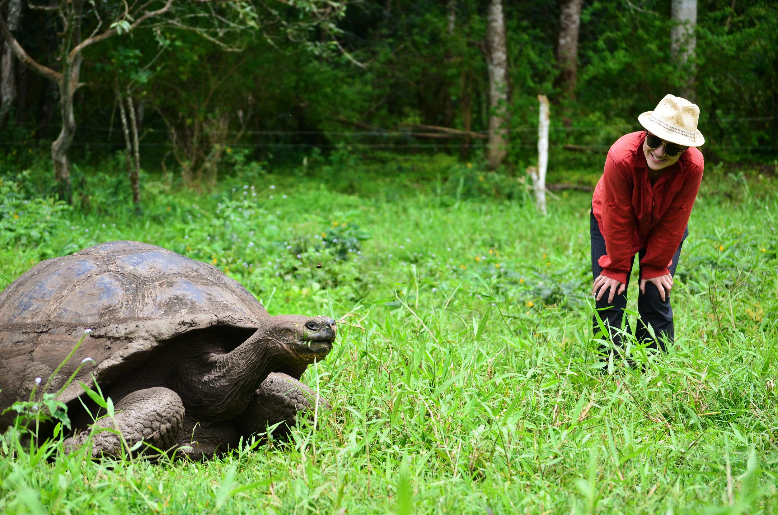 Rebecca has a moment with a giant tortoise at the preserve on Santa Cruz Island