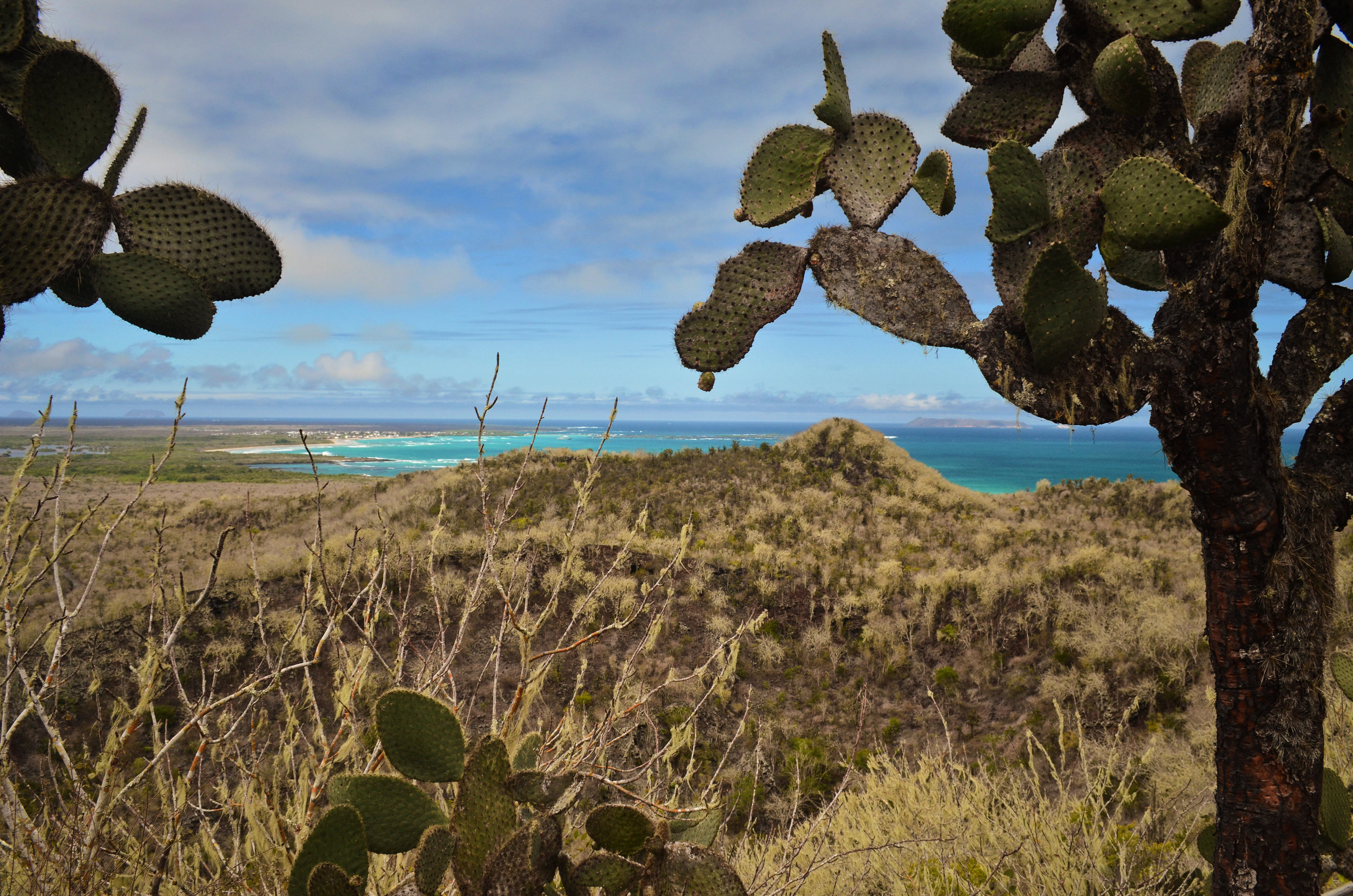 Cacti and dry brush meet turquoise waters on Isabela Island