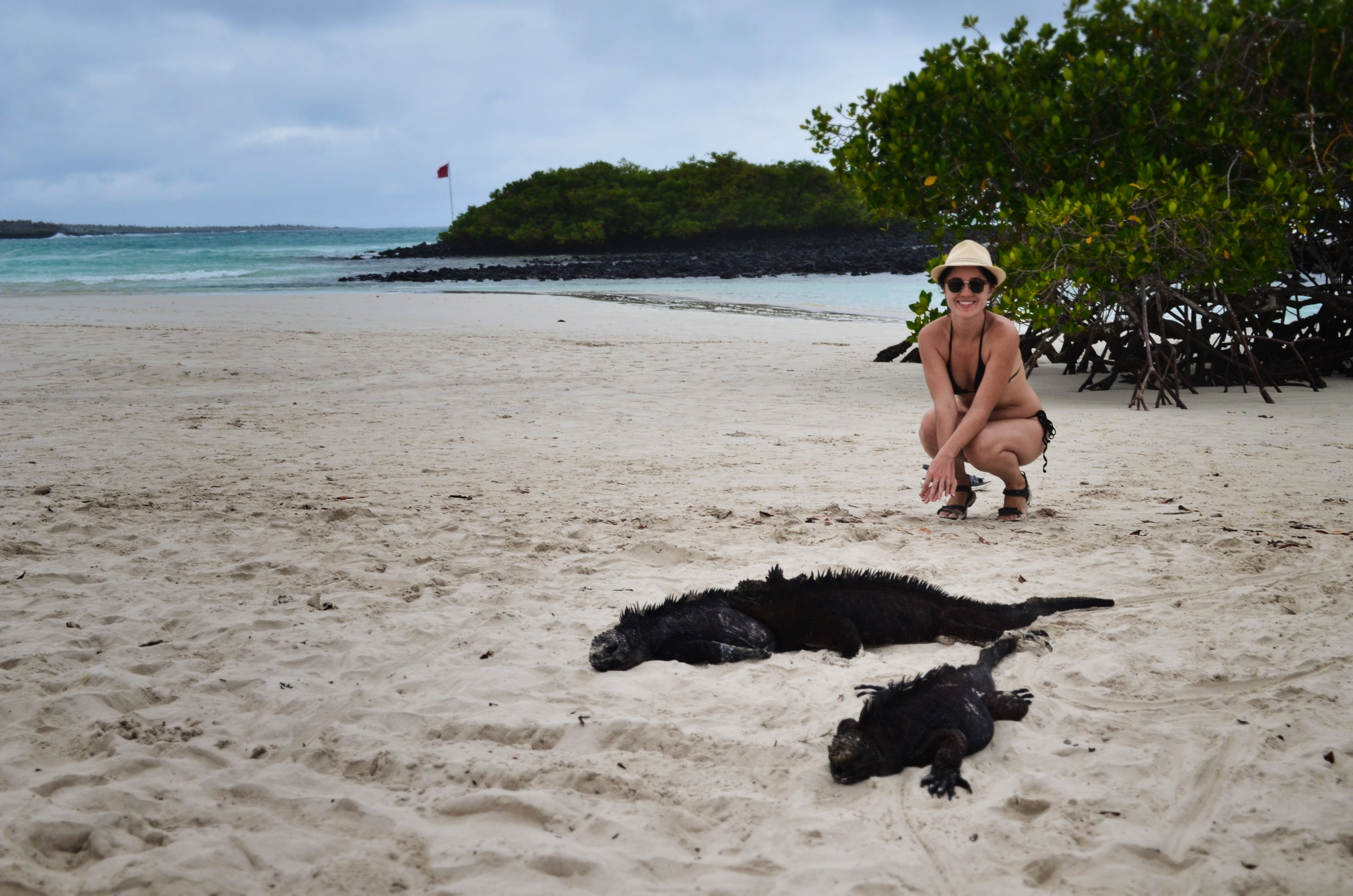 Marine iguanas sunbathe at Tortuga Bay
