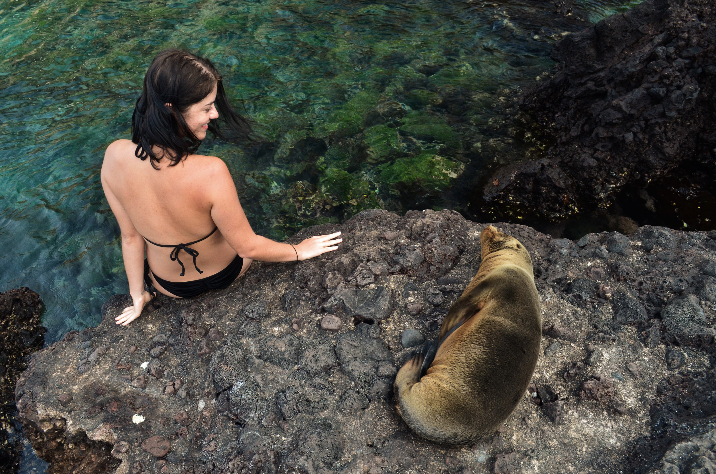A sea lion pup plops down next to Rebecca for an afternoon siesta