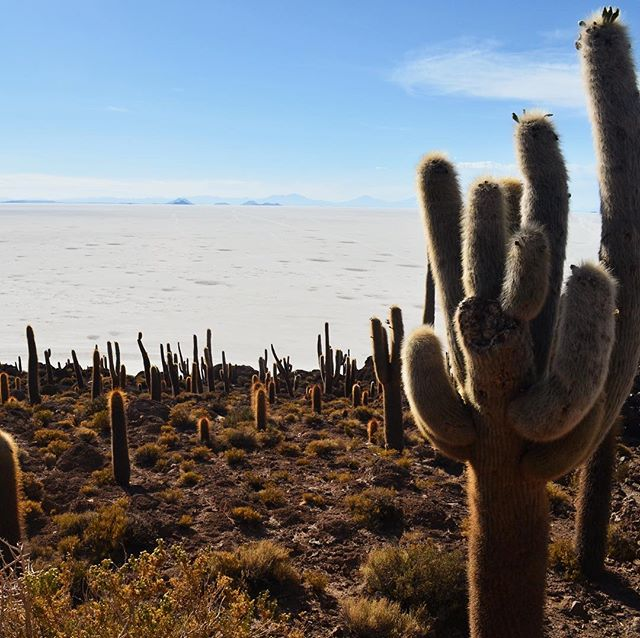 We interrupt our mountain feed for a cactus island in the middle of a sea of salt, since that feels more like the weather we've got right now in Buenos Aires. — This is Inkawasi, an island inhabited by cactus in the Salar de Uyuni, the world's largest salt flat. In pre-colonial times, the Incas came here to seek refuge from the Spanish conquistadors. And millions of years before that, all of this used to be covered in water. Even up until a few years ago water could be seen surrounding this island. Today, because of climate change, the Salar is loosing water at an unprecedented rate, threatening the entire ecosystem here. — #bolivia #visitbolivia #experiencebolivia #uyuni #climatechange #saltflats #naturephotography #travelphotography #lonelyplanet #passionpassport #ichosetowander #roamtheplanet #mytinyatlas #photooftheday #natgeo #speechlessplaces #neverstopexploring #traveldeeper #beautifuldestinations #exploretocreate #travelstoke #lifeofadventure #stayandwander #traveldiaries #travellife #globetrotter #theconstantlycurious #exploremore #travelblogger #travel