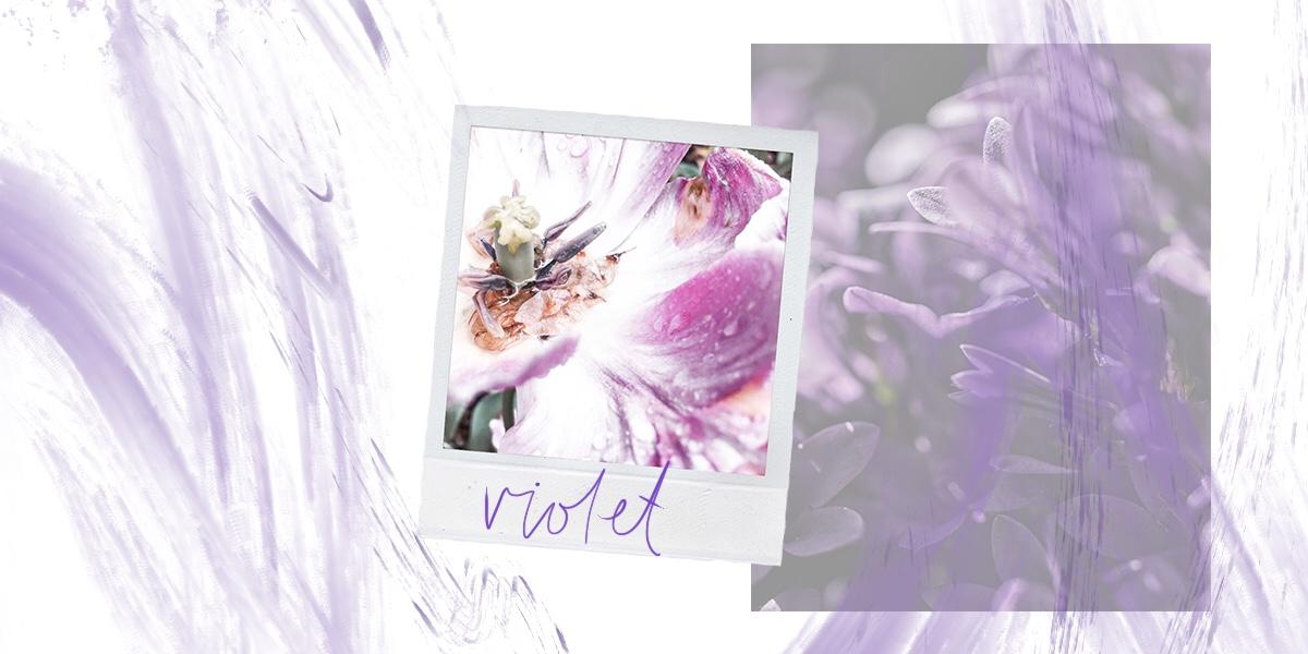 violet2.jpg