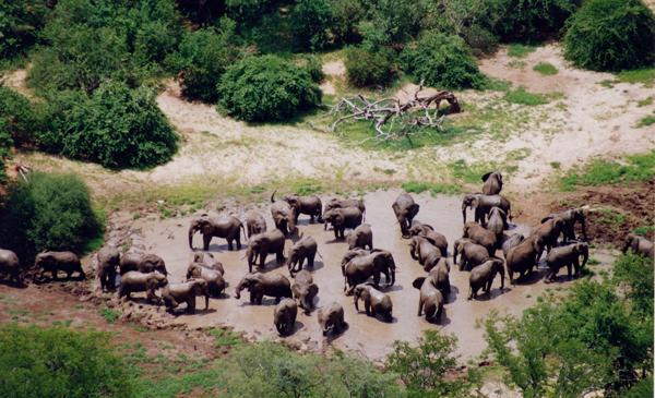 Elephant-census