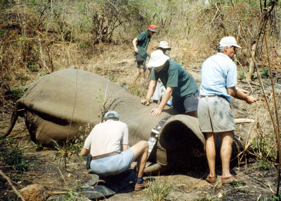 Elephant management project.jpg