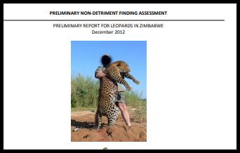 Leopard proj Dec 2012.jpg
