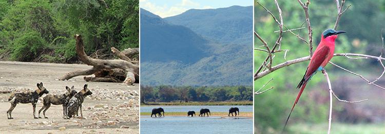 Wildlife combo.jpg