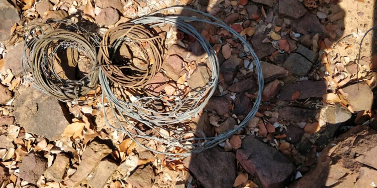 Snares collected on patrol - for hippol kudu, impala & warthog.jpg