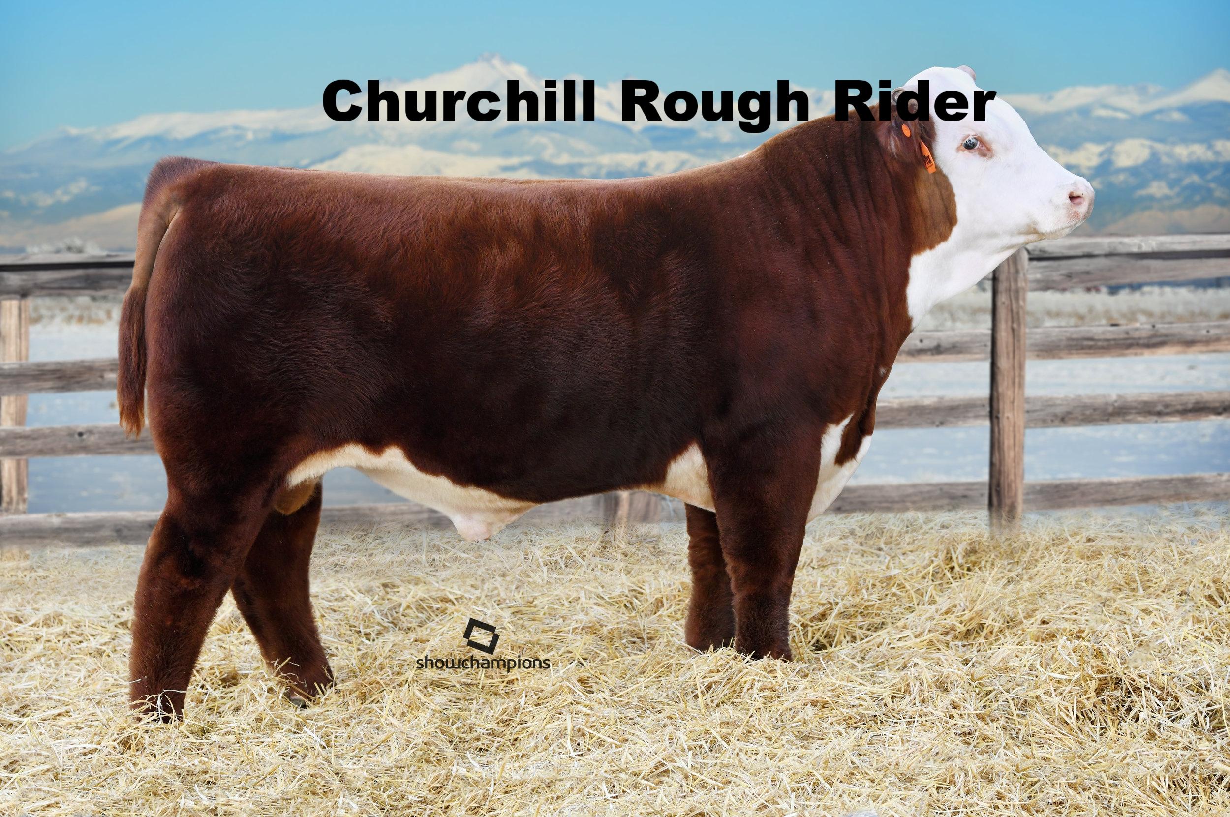 AB18-1-9116 Churchill Rough Rider 719E.jpg