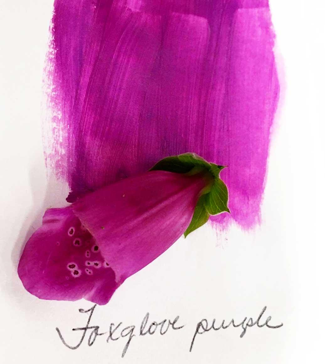 AD-Foxglove-Love-Brightened.jpg