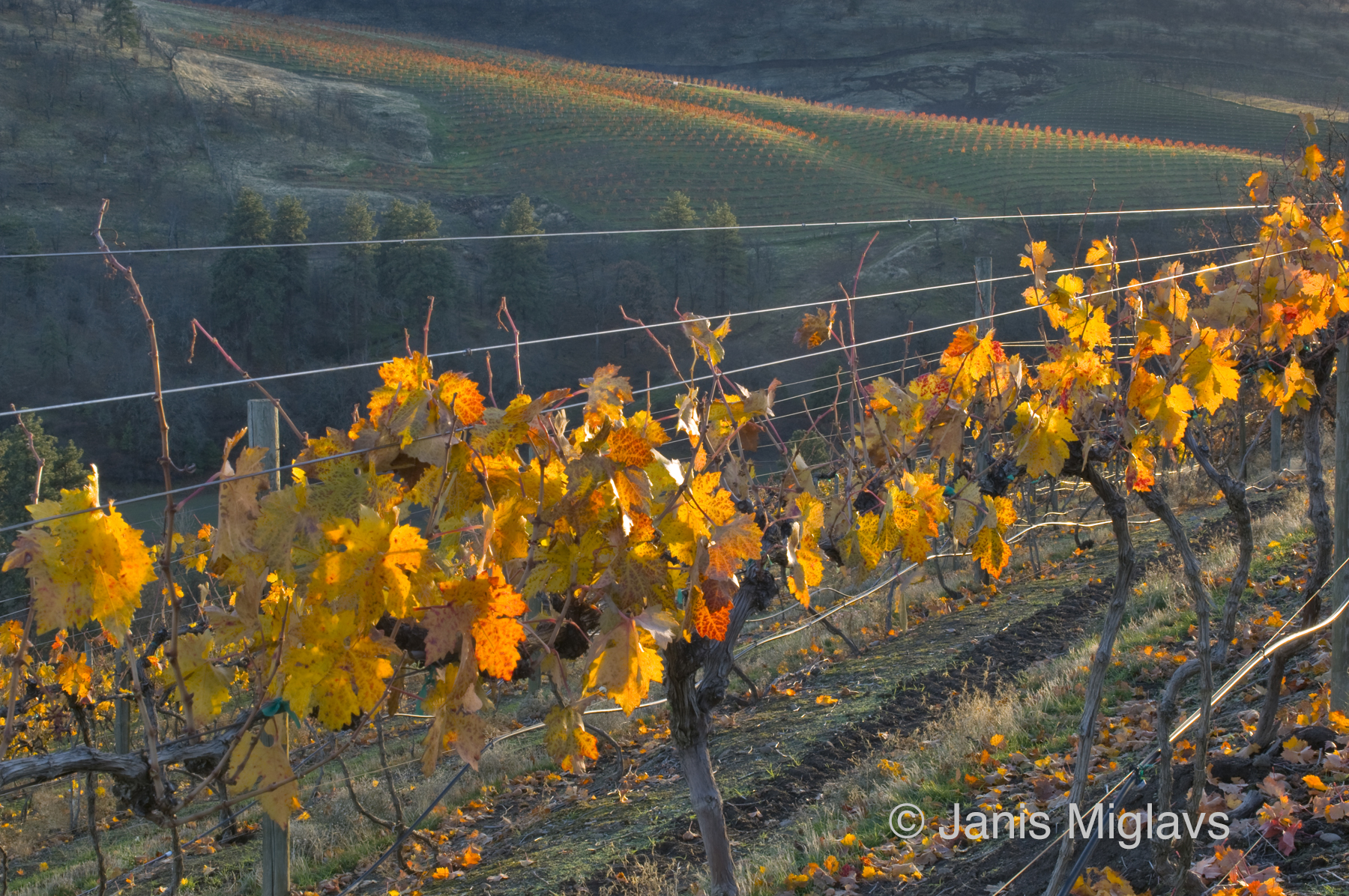 Fall in the Hills Above The Dalles