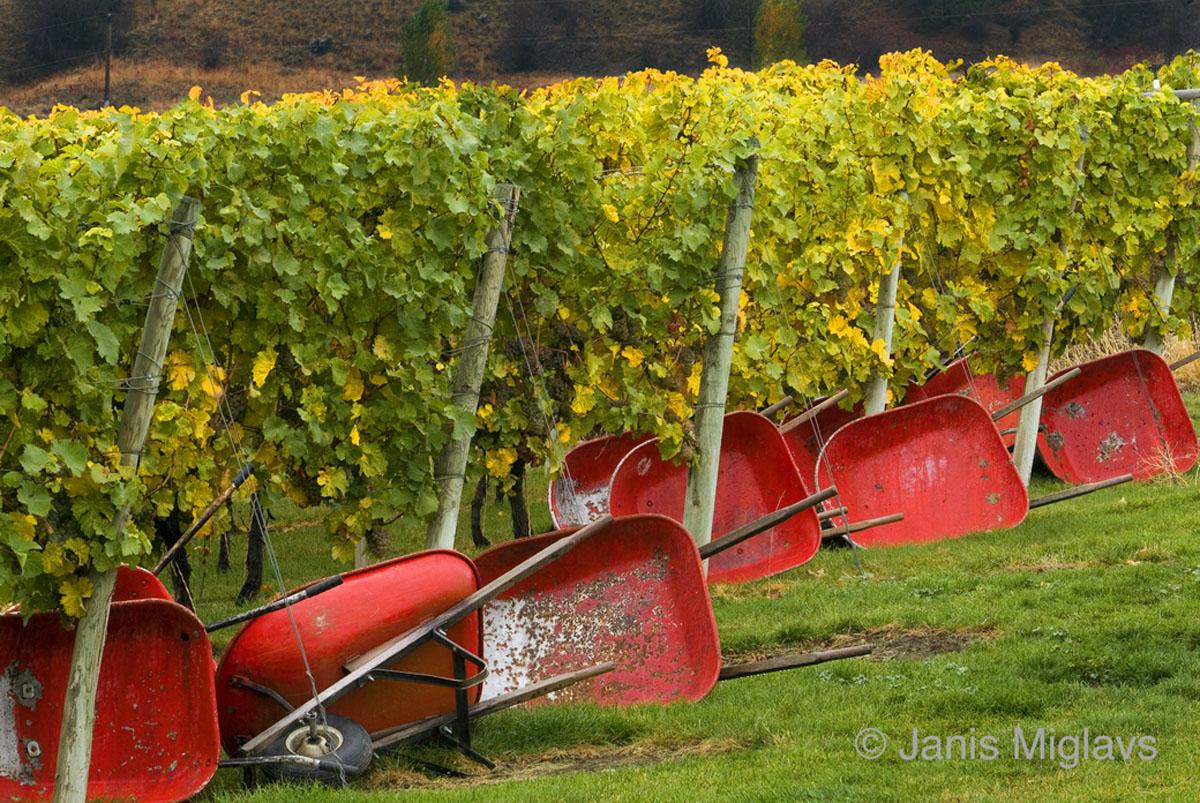 Vineyards World-Wide