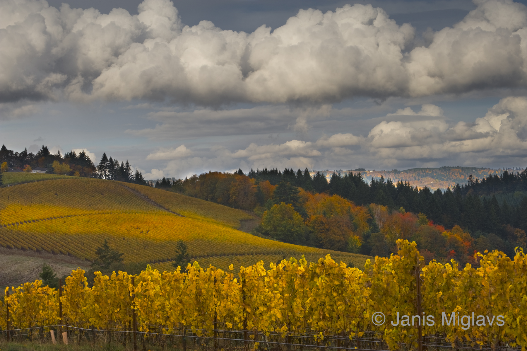 Clouds over Dundee Hills Vineyards