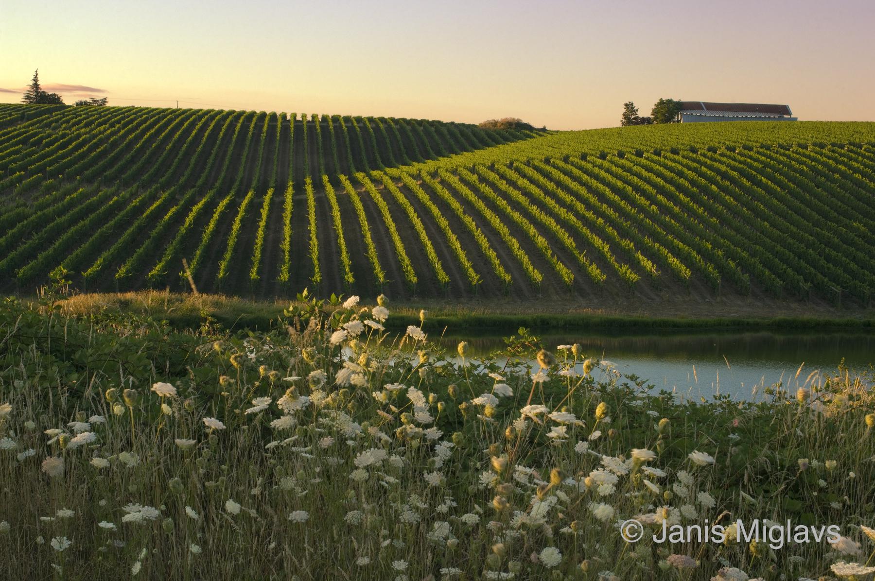 Biodynamic Northern Willamette Vineyard 1