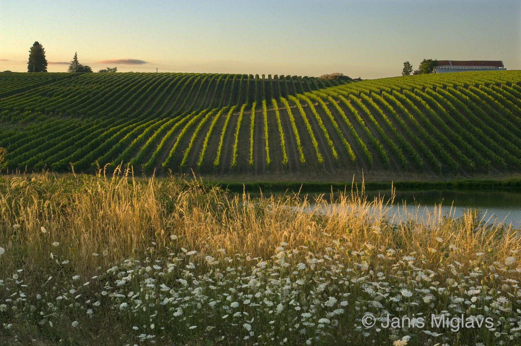 Biodynamic Northern Willamette Vineyard 2