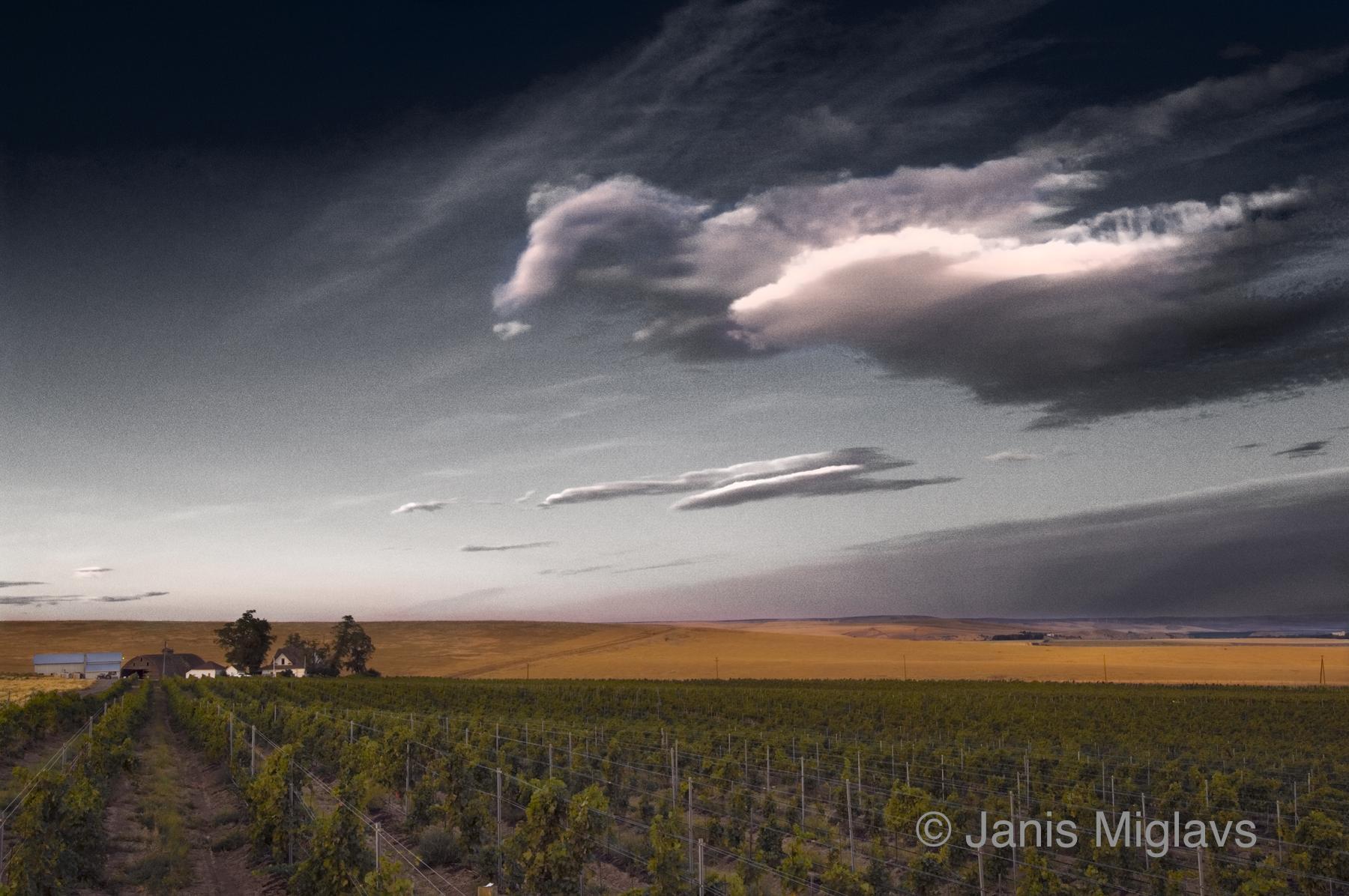 Clouds Over Oregon Walla Walla Vineyard 2