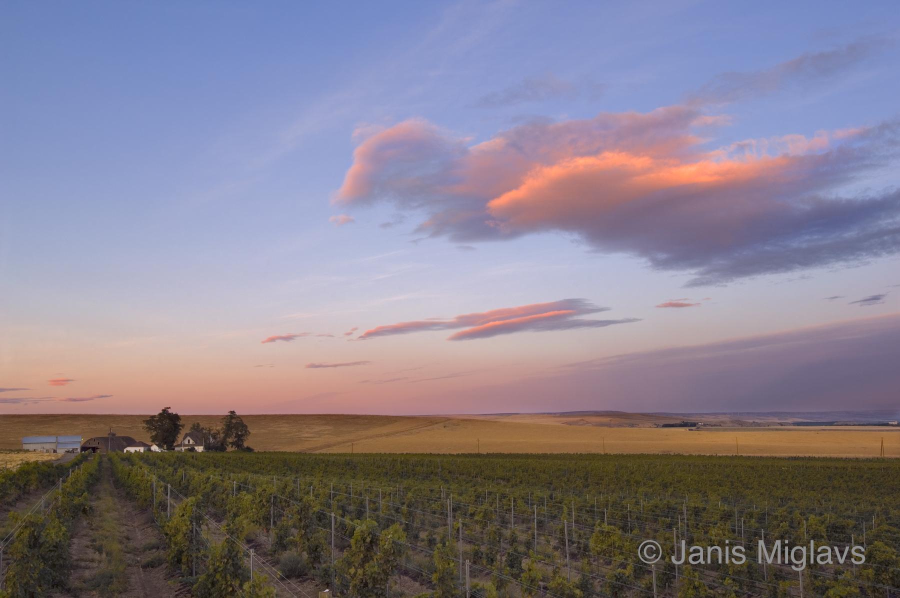 Clouds Over Oregon Walla Walla Vineyard 1