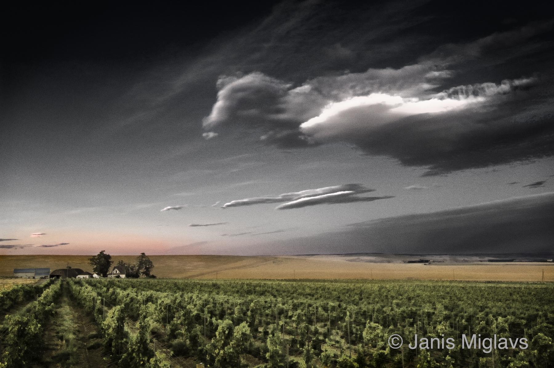 Clouds Over Oregon Walla Walla Vineyard 3