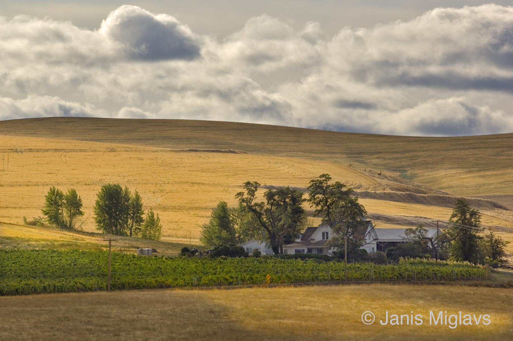 Oregon Walla Walla Farm With Vineyard