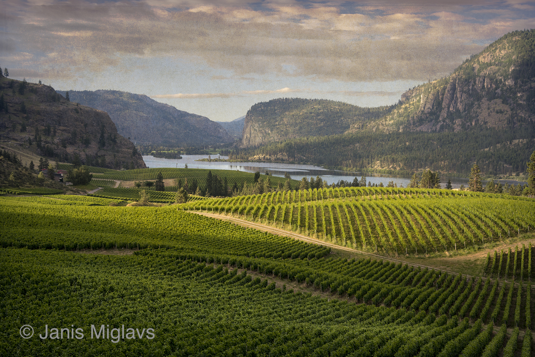 Canada Okanagan Vineyard View