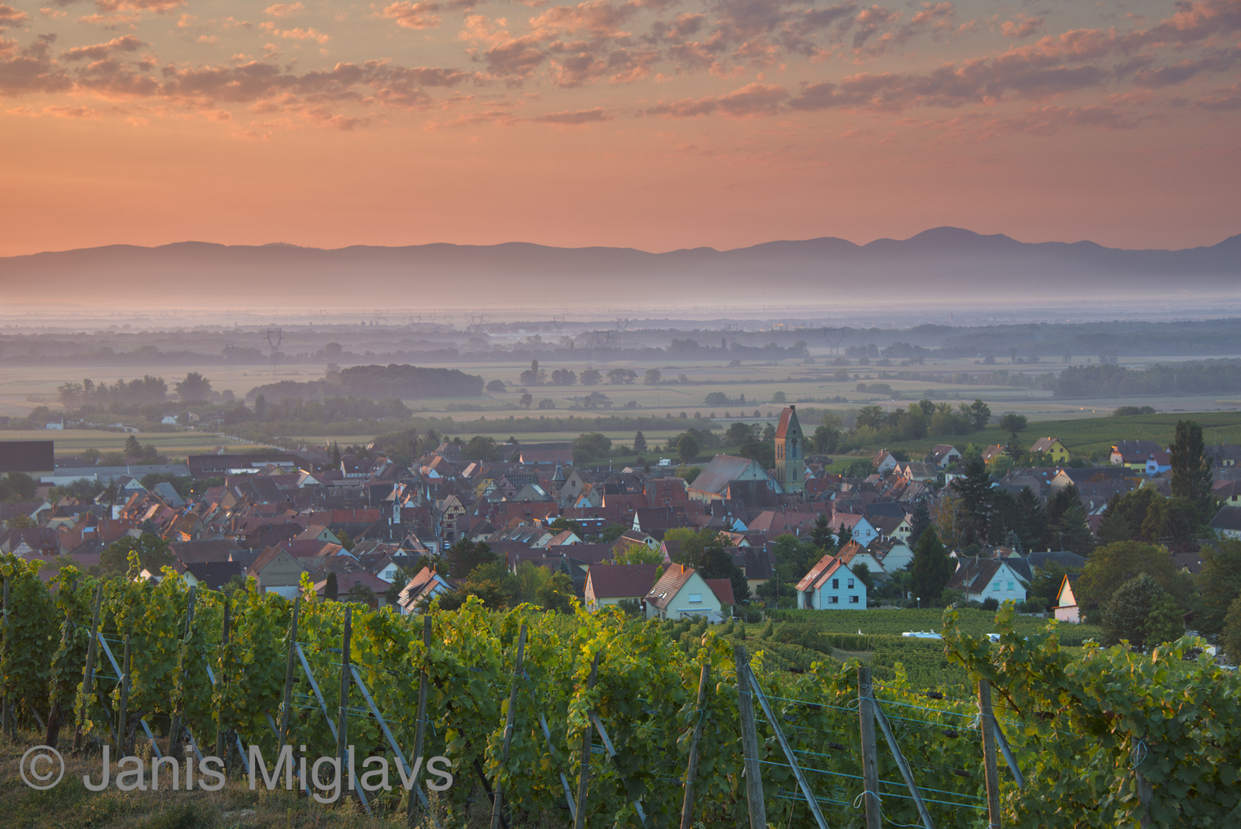 France Vineyard Above Equisheim in Alsace