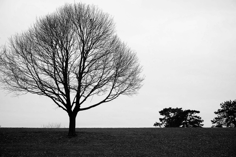 I like the individualism trees so often exhibit.