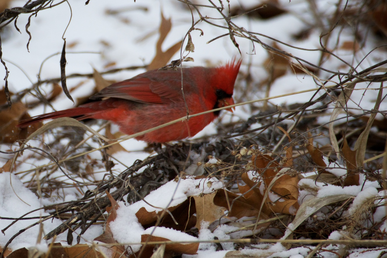 One of the member of the College of Cardinals.