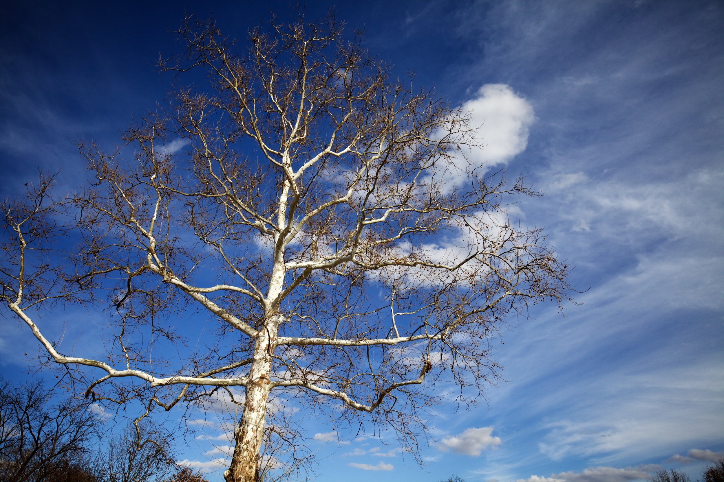 Tree and sky - it doesn't get much simpler than that.
