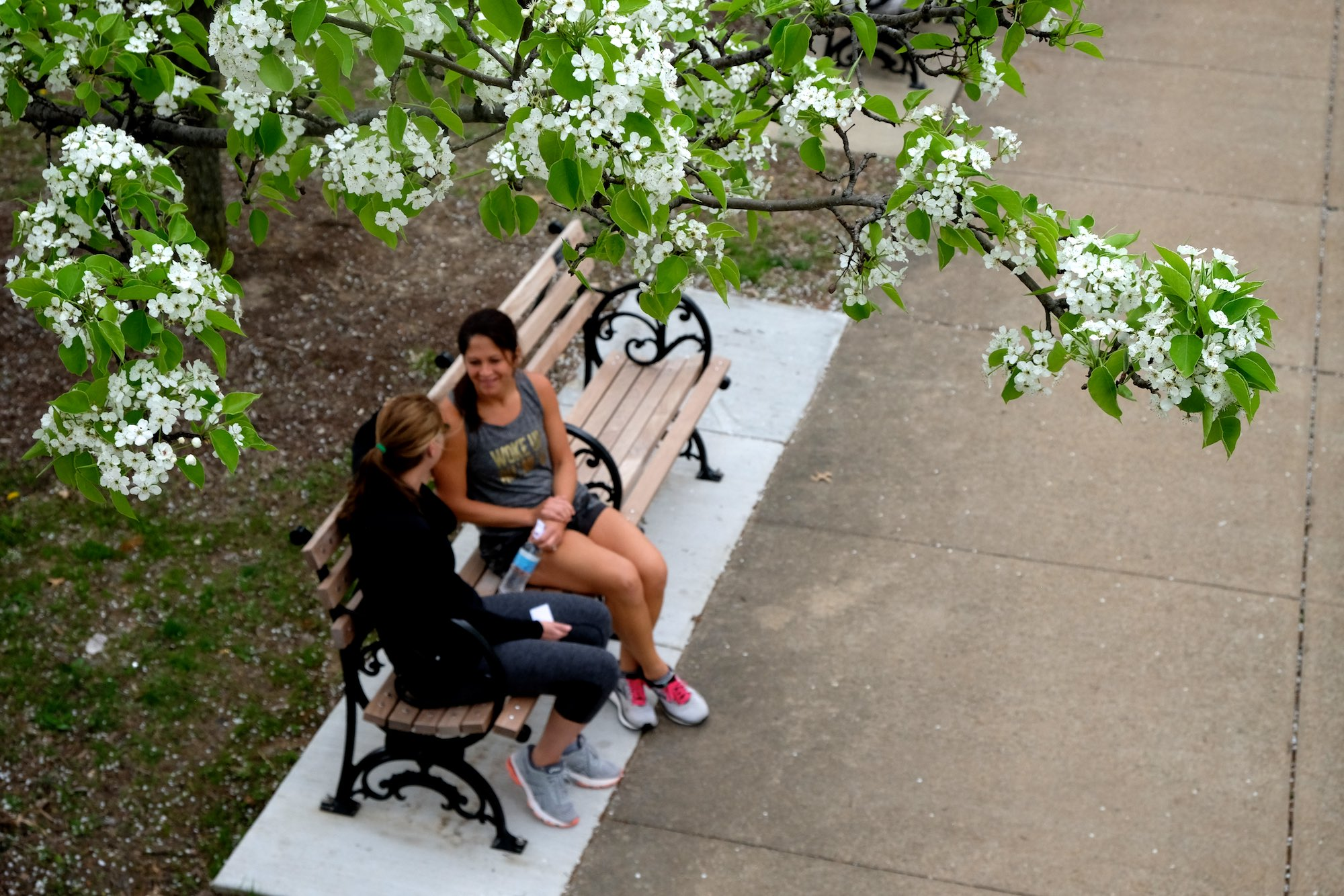 Day 101 - Friends sit and talk on one of the benches under a blooming Bradford pear tree by the Visitor Center.