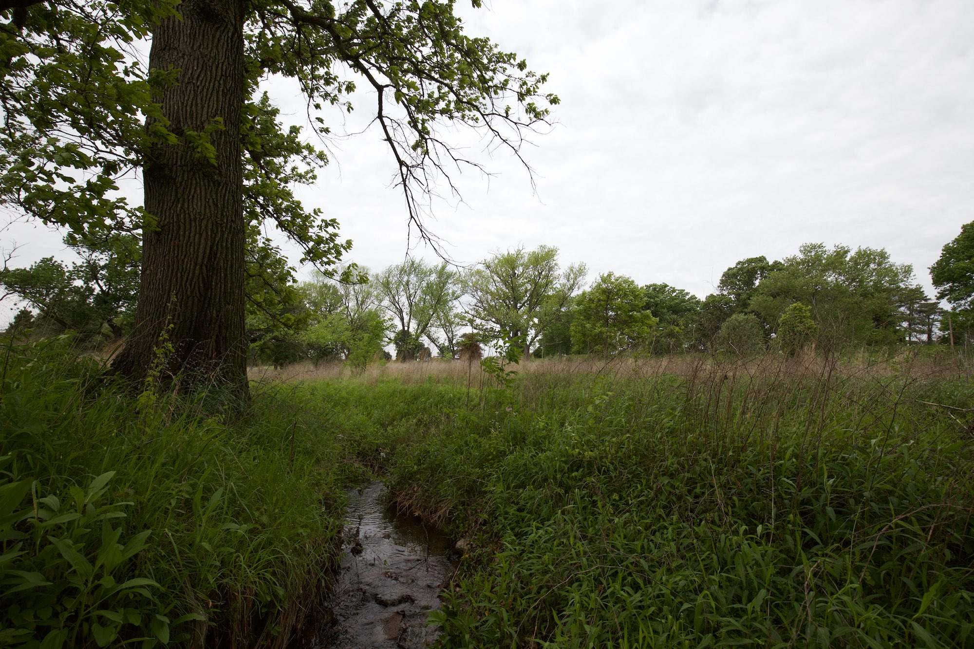 In the Hidden Creek Savanna by the old oak, I wade the creek. Click on image for more photos.