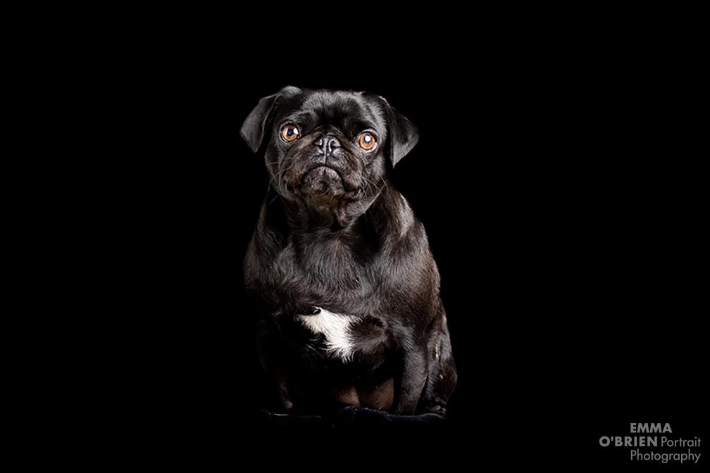 dog portrait photography johannesburg