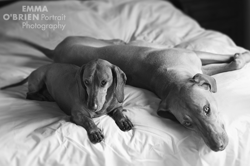 rescue dog photography