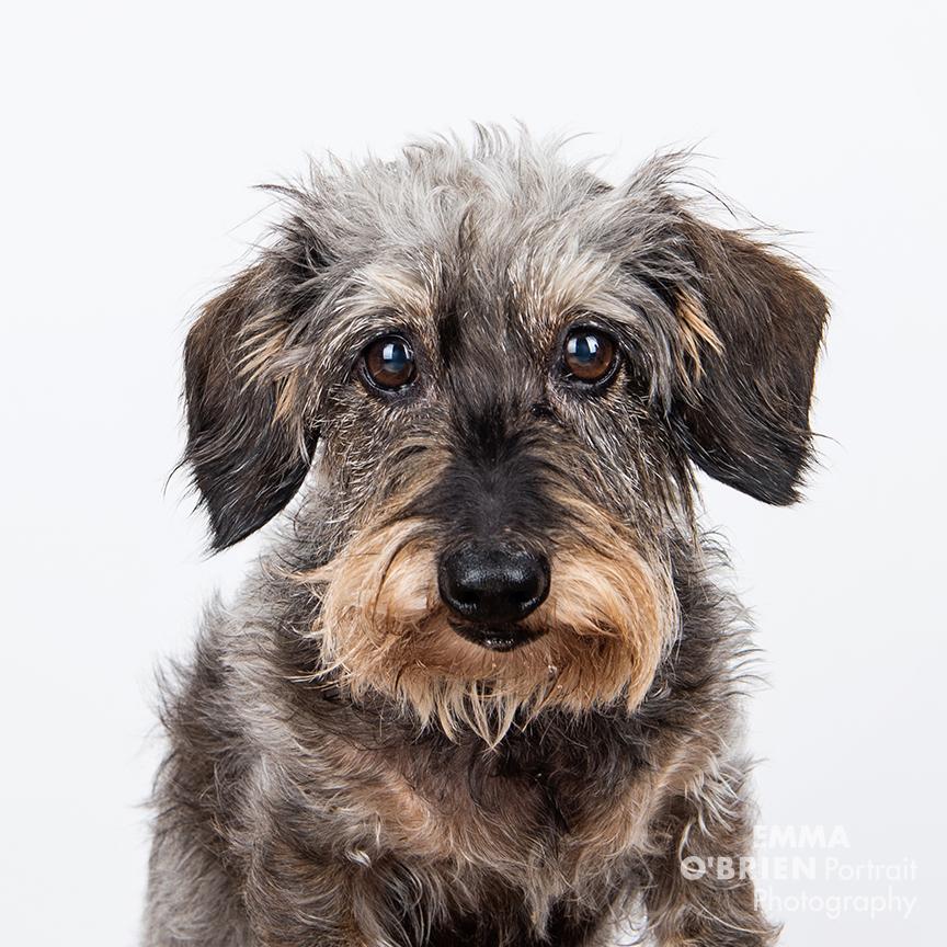 studio dog portraits on location johannesburg