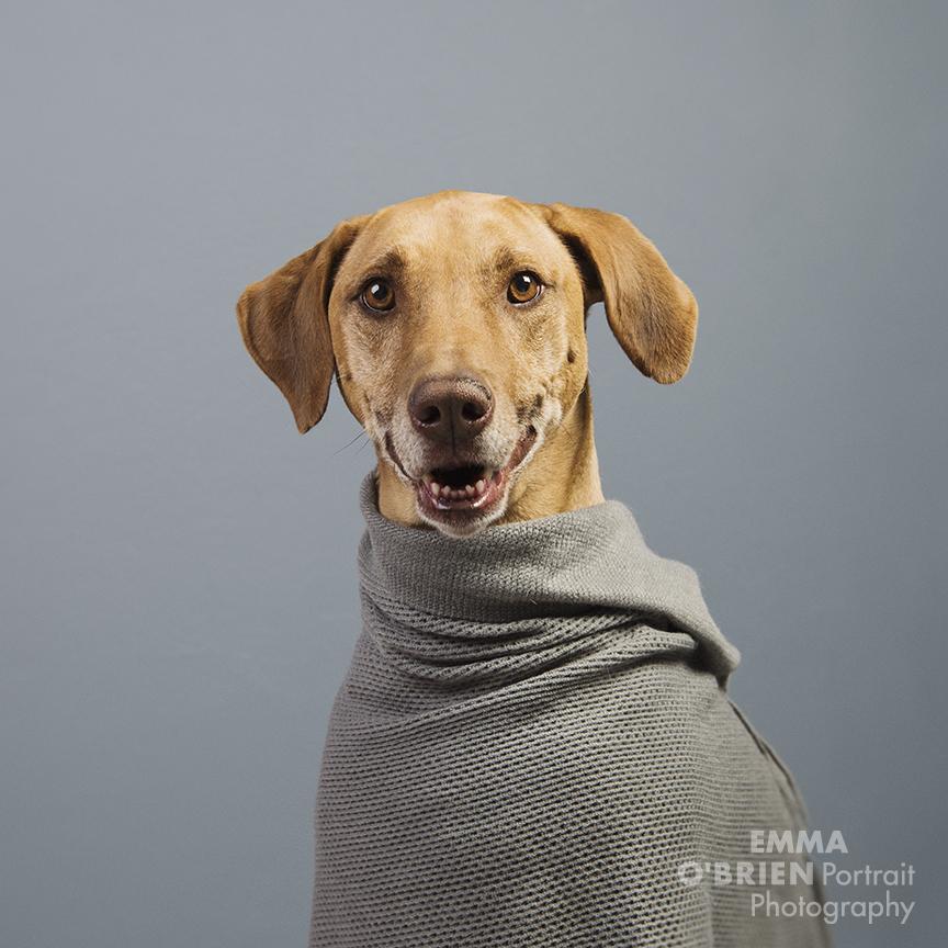 fashion hound 2018 pantone colours dog photography