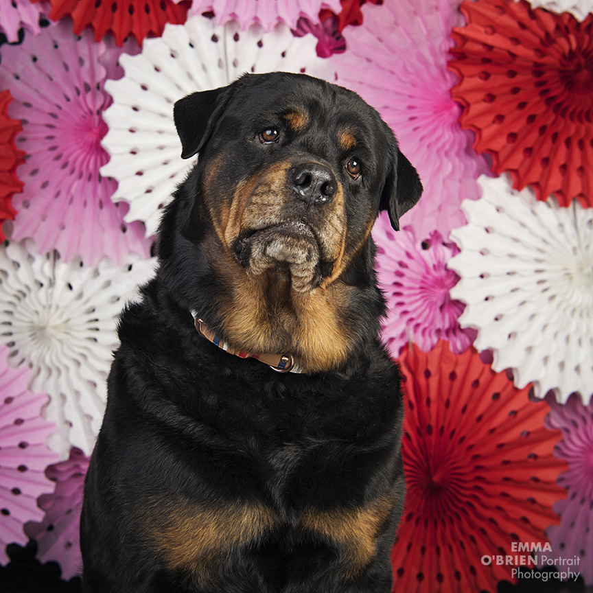 johannesburg dog photographer