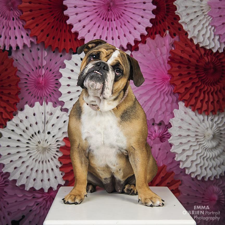 dog photography johannesburg