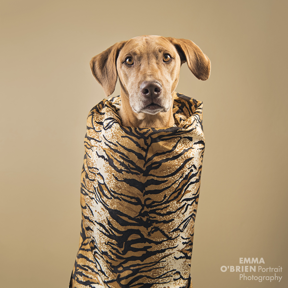 Dog fashion shoot photography