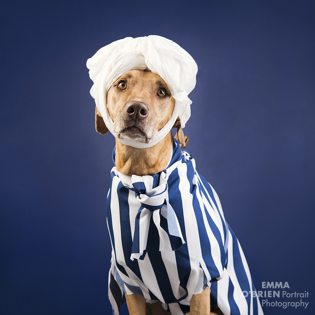 6 hysterical fashion week looks doggy style