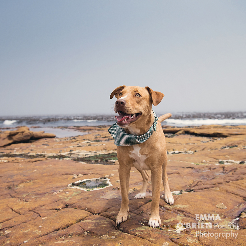 Rescue dog Maya photographed in cape town by Emma O'brien