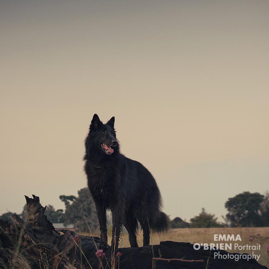 black dog photography Emma O'Brien Johannesburg Pretoria