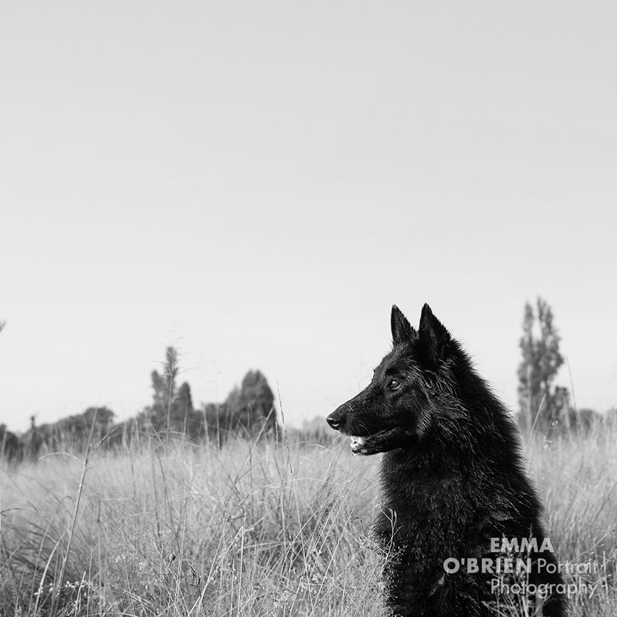 black dog photography tips from specialist dog photographer Emma O'brien