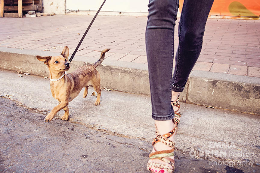 dog portrait photographer johannesburg
