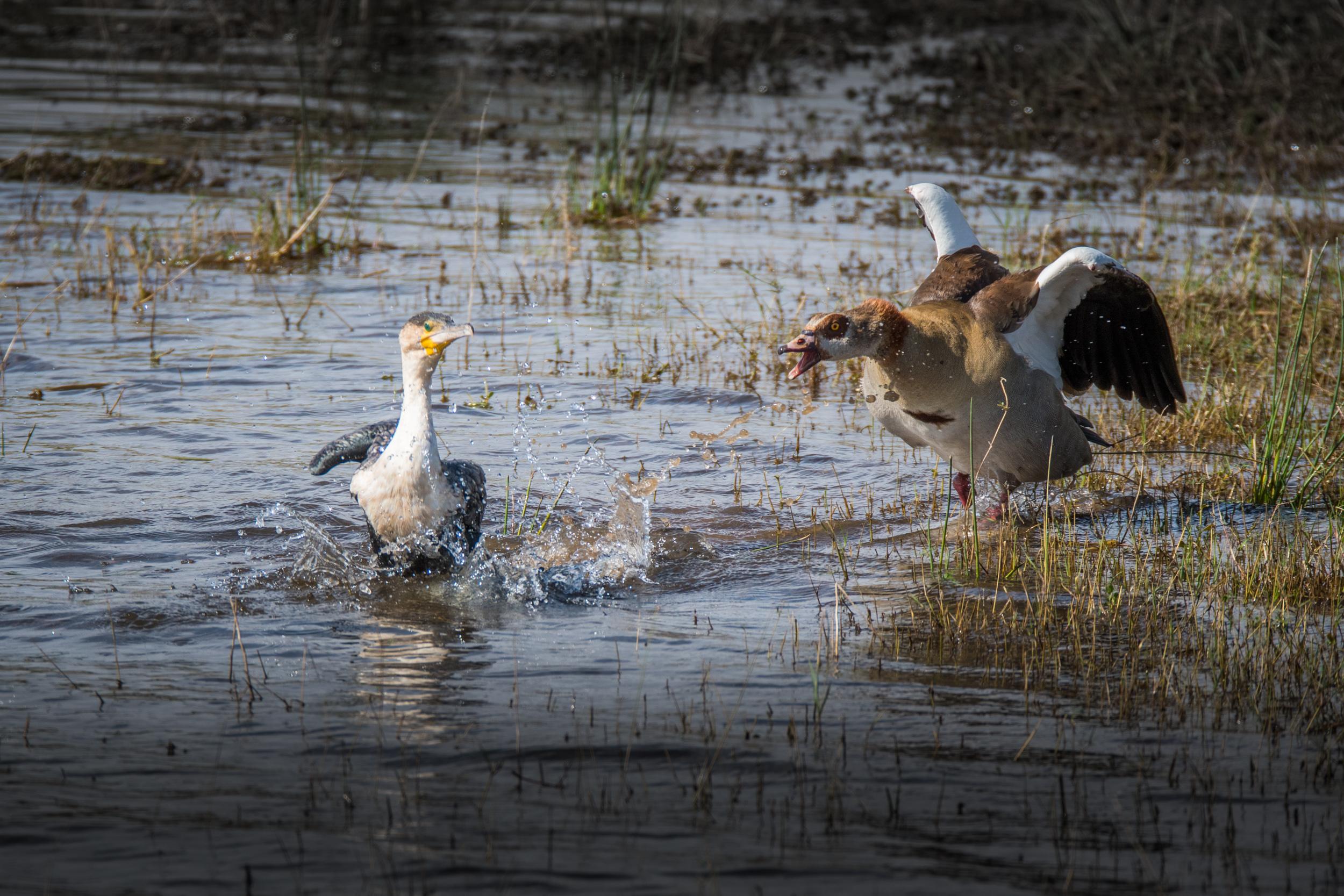 birds-large-nowatermark-1.jpg
