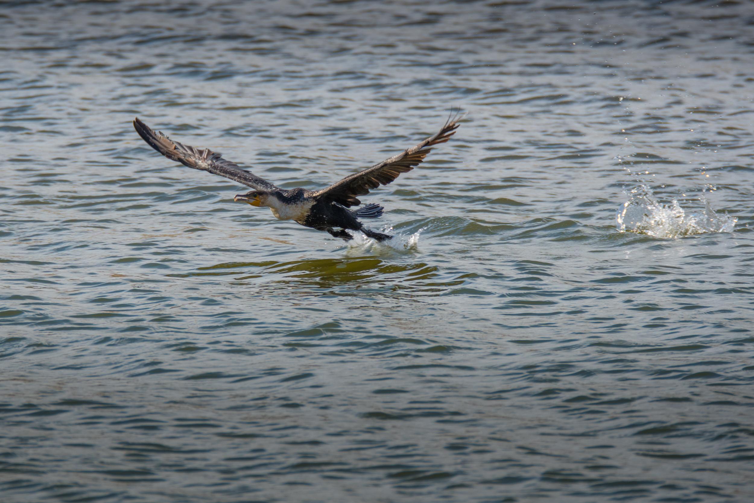 birds-large-nowatermark-15.jpg